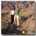 In Death Valley, California for the hundred year bloom
